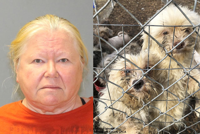 Photo: Woman had 44 frozen dogs, 130 live dogs in home