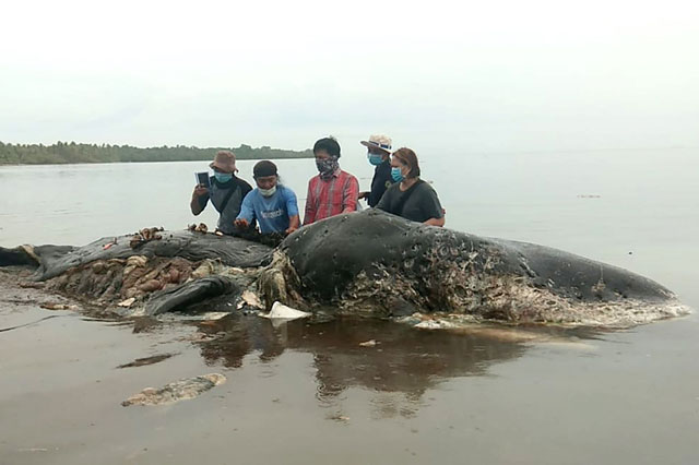 Photo: Dead whale in Indonesia found with 6 kg of plastic in stomach