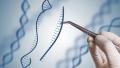 Photo: China to investigate scientist's claim of gene-edited babies