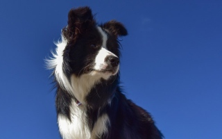 Photo: Research reveals why dogs' noses are so cold