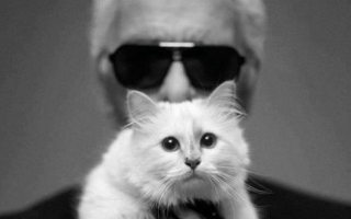 Photo: Battle to control Karl Lagerfeld's cat's Instagram gets catty