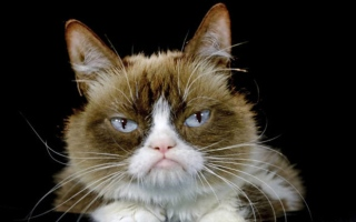 Photo: Grumpy Cat, who entertained millions online, dies at age 7