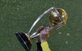 Photo: Cricket World Cup: five memorable moments