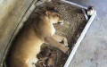 Photo: Florida zoo celebrates its first lion birth in 30 years