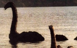 Photo: An ancient Loch Ness Monster look-alike was found in Antarctica