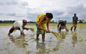 Photo: Monsoon covers most parts of cane, cotton, soybean fields in India