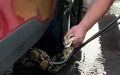 Photo: Police and residents rescue 6-foot snake from car engine