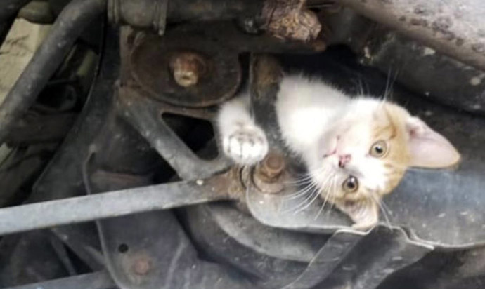 Photo: 9-week-old kitten well after rescue from car's subframe