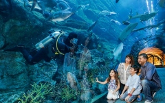 Photo: Dubai Aquarium and Underwater Zoo voted best aquarium in the world