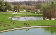 Photo: Sharjah's Wasit Nature Reserve recognised as 'Wetland of International Importance'