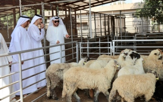 Photo: MOCCAE reviews livestock testing processes at Sharjah Airport, Abattoir and Cattle Market in Dubai