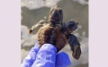 Photo: Two-headed turtle found in South Carolina