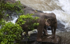 Photo: 6 elephants drown, 2 rescued in Thai national park