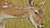 Photo: Zombie deer fears