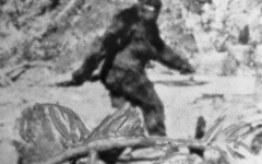 Photo: Man believe he has captured Bigfoot howling