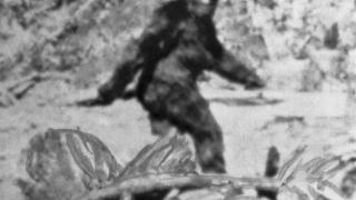 Photo: Man believe he has captured Bigfoot howling