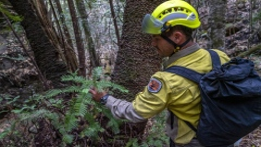 Photo: Race to save animals on Australia's fire-ravaged 'Galapagos'