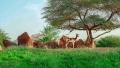 Photo: Al Ain Zoo leads efforts to develop Dama gazelle conservation strategy