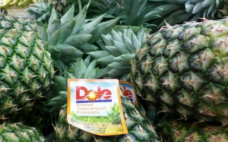 Photo: Pineapple plants could prevent snoring