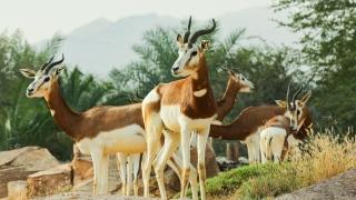 Photo: Al Ain Zoo celebrates International Day for Biological Diversity