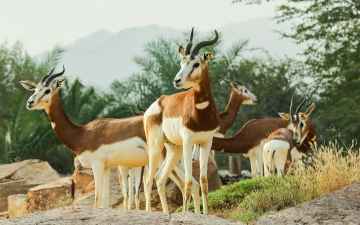 Photo: Al Ain Zoo celebrates International Day for Biological Diversity
