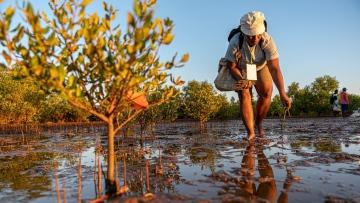 Photo: Nation Brand's pledge to plant 10.6 million trees in Nepal, Indonesia underway despite pandemic