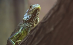 Photo: Al Ain Zoo offers specialised care to lizards population